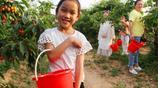 週末領上孩子去果園採摘櫻桃 第一次見到別樣的鄉村田園美 玩瘋了