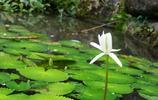 微單行記 深圳仙湖植物園之花