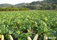 蘿蔔幾分錢一斤,而蘿蔔乾20多元一斤,農民為什麼不把蘿蔔加工成蘿蔔乾出售?