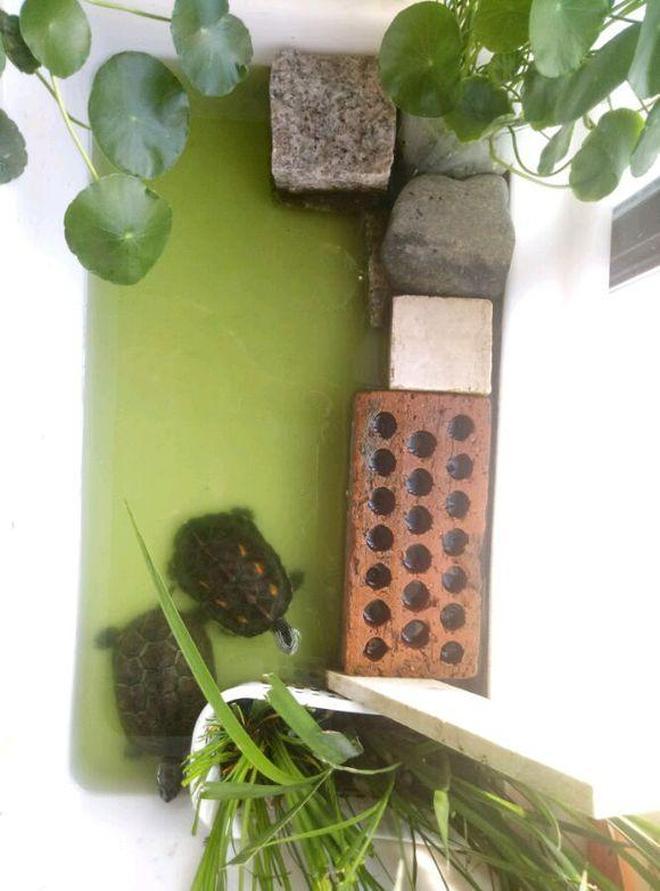 一花一草一世界,花龜和草龜的幸福小窩