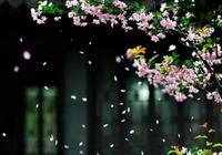 《落花》:李商隱的春日傷感