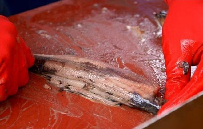 很多人都把魚身上5寶丟掉了,這5寶常吃身體好