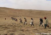 """曾經一公頃草原1400只老鼠 內蒙古牧民如今積極""""打地鼠"""""""