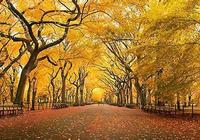 在秋天歡聚