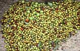 農村8旬老人上樹摘酸棗,給智障兒買月餅吃,但願自己多活幾十年