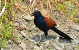 森林中的哪些鳥兒,為了大自然添加了不可取代的地位,必須保護