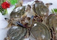 梭子蟹不能和什麼一起吃 梭子蟹的吃法有哪些