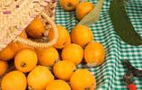 枇杷百科:枇杷的營養價值及挑選存儲方法