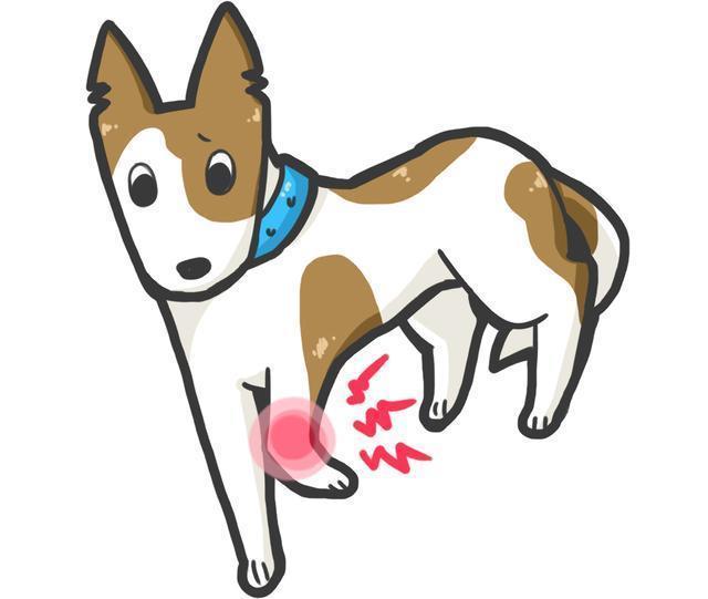 狗狗老去的5個症狀,很多主人都沒發現,這會讓狗狗的老年更痛苦