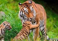 俗語說:虎豹不可騎,人心隔肚皮,是何意?生活中注意這三種人