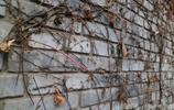 華圖華影:秋風起 葉落滿芳庭