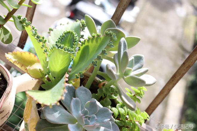 植物攝影:多肉植物