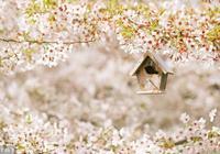 浮生小札記:春天心曲