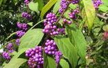 懸紫珠,閱晴空,秋風乍起皆靈動
