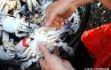 早市上梭子蟹35元一斤 大媽三步驟挑肥蟹 攤主都刮目相看跟後學