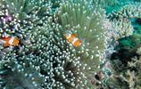 海底世界圖集:繽紛海藻