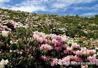 涼山資訊|萬畝索瑪開遍山,金陽索瑪文化旅遊宣傳月活動正式啟動~