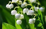 懂花的都喜歡養這6種花卉盆栽,耐活好打理,開花巨漂亮