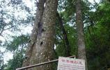 廣西來賓金秀銀杉公園