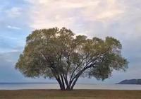 「生命」雲層遮蔽了陽光,是因為你的心靈飛得還不夠高!