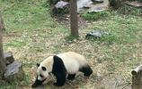 南京第一動物園——南京紅山森林動物園