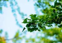夏至詩詞10首:世間清景是微涼