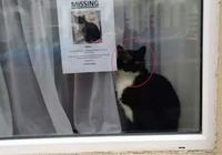 主人找不到貓咪,只好貼出尋貓啟示,路人一看尷尬了