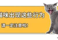 貓咪生病的時候都有哪些特徵?出現這6種症狀鏟屎官就要注意啦!