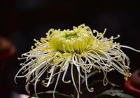 新手請注意!這些花卉雖然好看,新手不易上手容易養死!