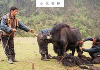 一妻多夫的不丹耗牛人