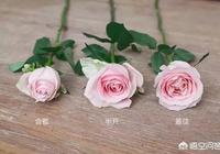 新手選購花材有什麼技巧嗎?或者注意事項?