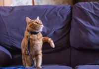 《流浪貓鮑勃》:改變人生的力量,一點點溫暖就夠