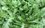 小時候根本瞧不上這野菜,如今遍尋不到,只能高價購買,營養美味