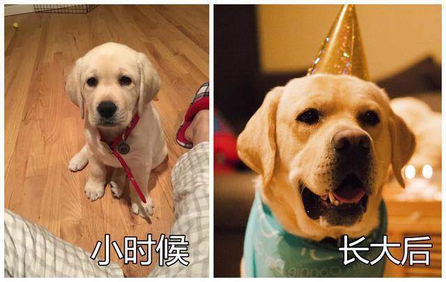 狗子小時候和長大後的照片對比,歲月是把殺豬刀啊