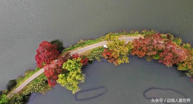 8張圖告訴你南京的秋天到底有多絢爛 你還不來打卡嗎