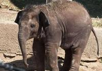 為什麼非洲死去的大象屍體不能隨便碰?專家:稍有不慎或沒命