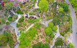 陽春四月,濟南泉城公園繁花似錦,春意盎然美不勝收
