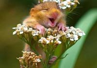 這些微笑的動物們,會讓你也露出笑容
