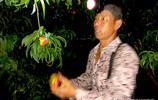 晉南農村,桃農凌晨4點戴頭燈桃園裡下桃,農民真不容易
