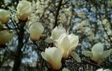 百花公園丨春色滿園關不住,紅粉次第待荼蘼