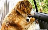 三狗子在馬桶裡找到了啥好東西?10張有趣的狗狗圖讓你笑個不停