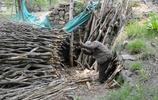 農村68歲老大爺,兒子在城市住樓房,他不願給孩子添麻煩獨居10年