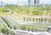 海口美舍河溼地公園鳳翔段梯田栽種水蒲桃棧道樹