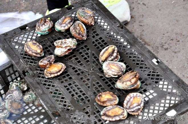 實拍 寒冬中青島早市 大蝦28元一斤 蛤蜊10元兩斤 網絡支付拾實惠