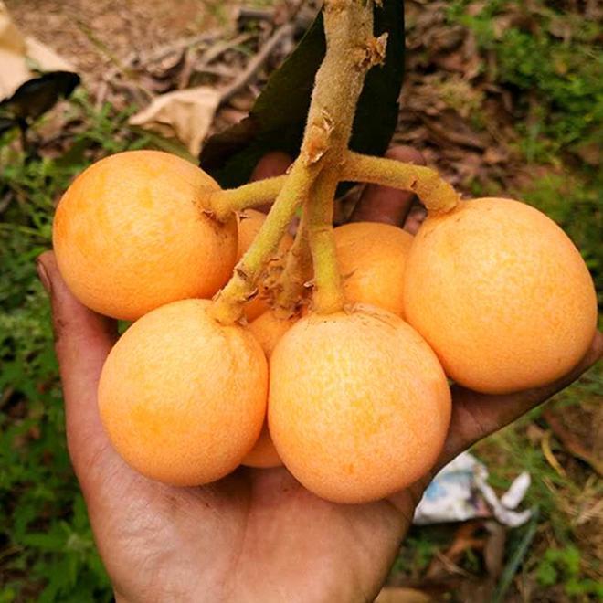 花草老是養不活?試著種上這些懶人果樹吧,果子清甜可口有營養
