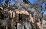 雪白雪白的山桃花開了,去水關長城實拍文化廣場、碑林及水關箭樓