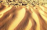 沙漠綠植,土地的守衛者