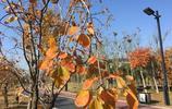 河南開封:冬季秋景中意湖,鍛鍊休閒好去處,怎是一個美字了得