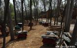 採風偶遇72歲養蜂老人,他說最多時養50箱土蜂,現在養的少有原因