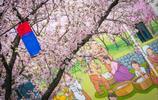 圖蟲風光攝影:濟州之桜